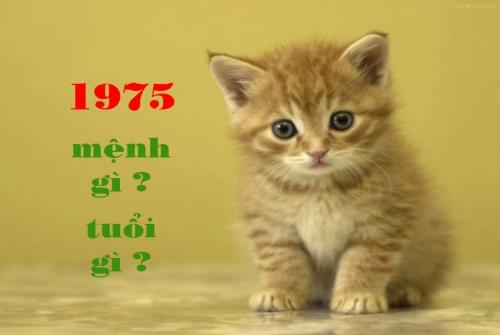 1975 mệnh gì ? tuổi gì ? và phong thủy hợp mệnh 1975 đầy đủ nhất 240120